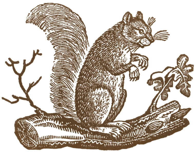 Free-Fall-Clip-Art-Primitive-Squirrel-GraphicsFairy2